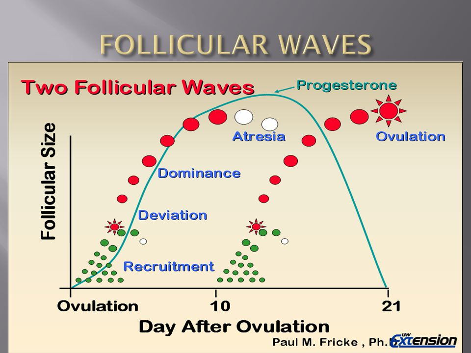 FOLLICULAR WAVES