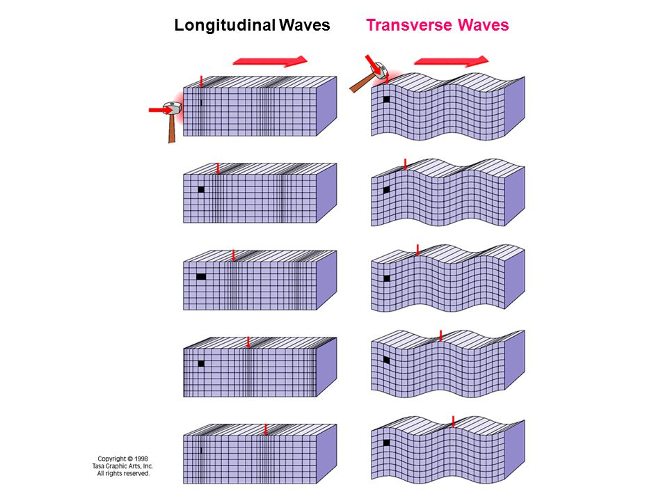 Longitudinal Waves Transverse Waves