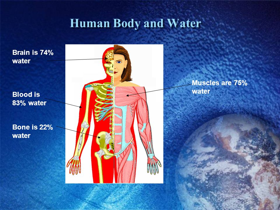 Human Body and Water Brain is 74% water Muscles are 75% water