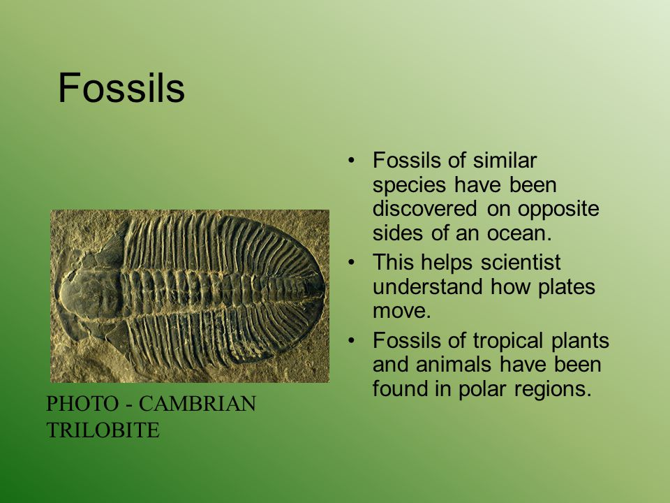 Fossils Fossils of similar species have been discovered on opposite sides of an ocean. This helps scientist understand how plates move.