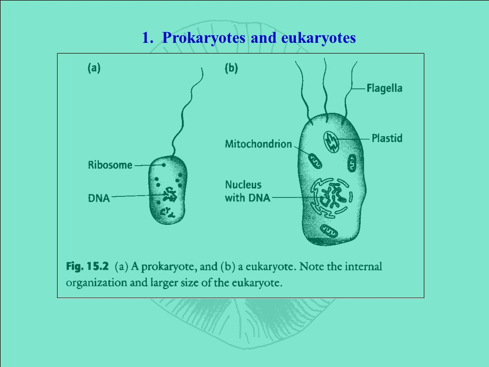 1. Prokaryotes and eukaryotes