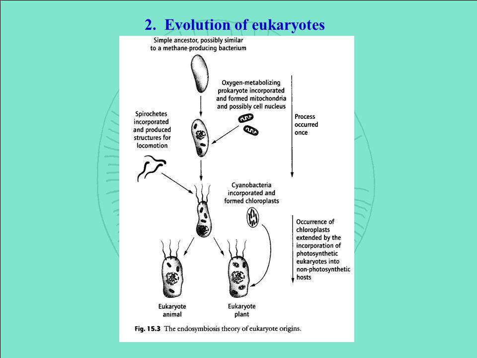 2. Evolution of eukaryotes