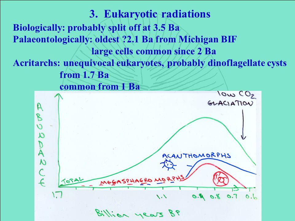 3. Eukaryotic radiations