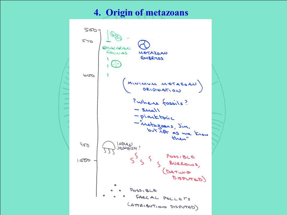 4. Origin of metazoans