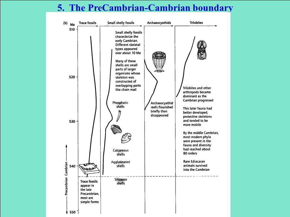 5. The PreCambrian-Cambrian boundary