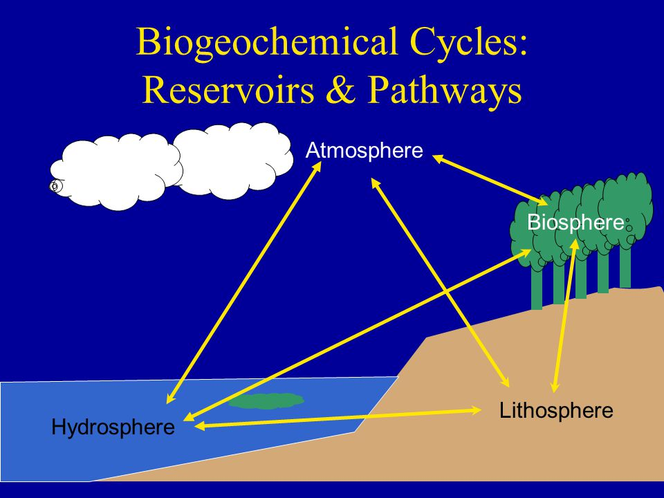 Biogeochemical Cycles: Reservoirs & Pathways