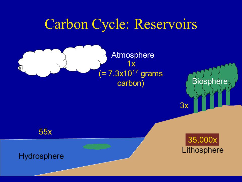 Carbon Cycle: Reservoirs