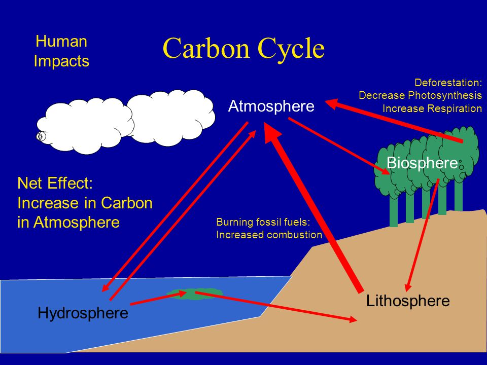Carbon Cycle Human Impacts Atmosphere Biosphere Net Effect: