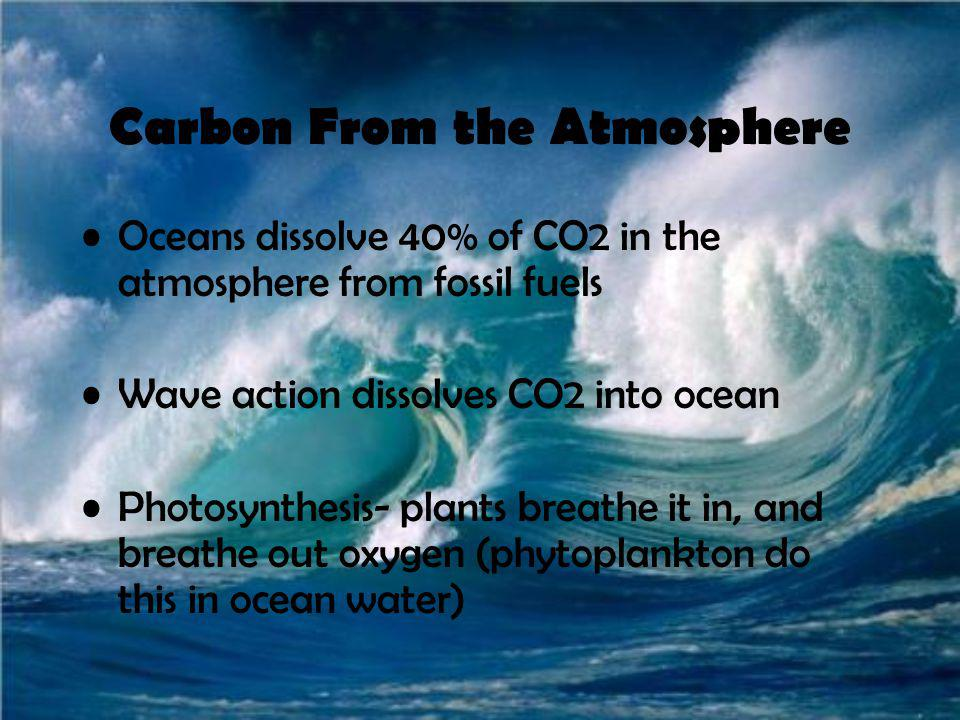 Carbon From the Atmosphere