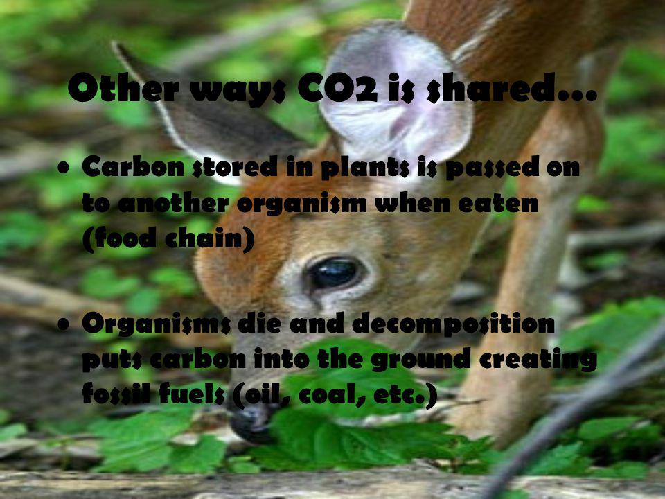 Other ways CO2 is shared…