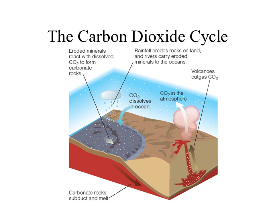 The Carbon Dioxide Cycle