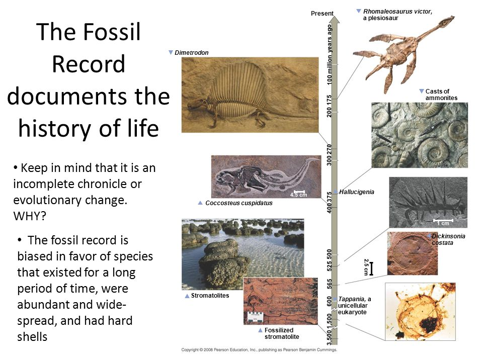 The Fossil Record documents the history of life