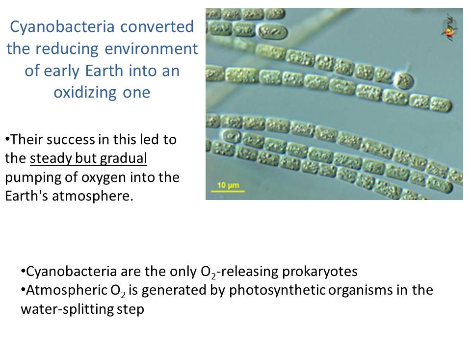 Cyanobacteria converted the reducing environment of early Earth into an oxidizing one