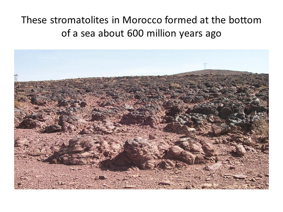 These stromatolites in Morocco formed at the bottom of a sea about 600 million years ago