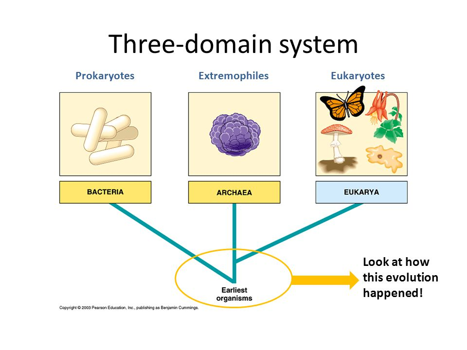 Three-domain system Look at how this evolution happened! Prokaryotes