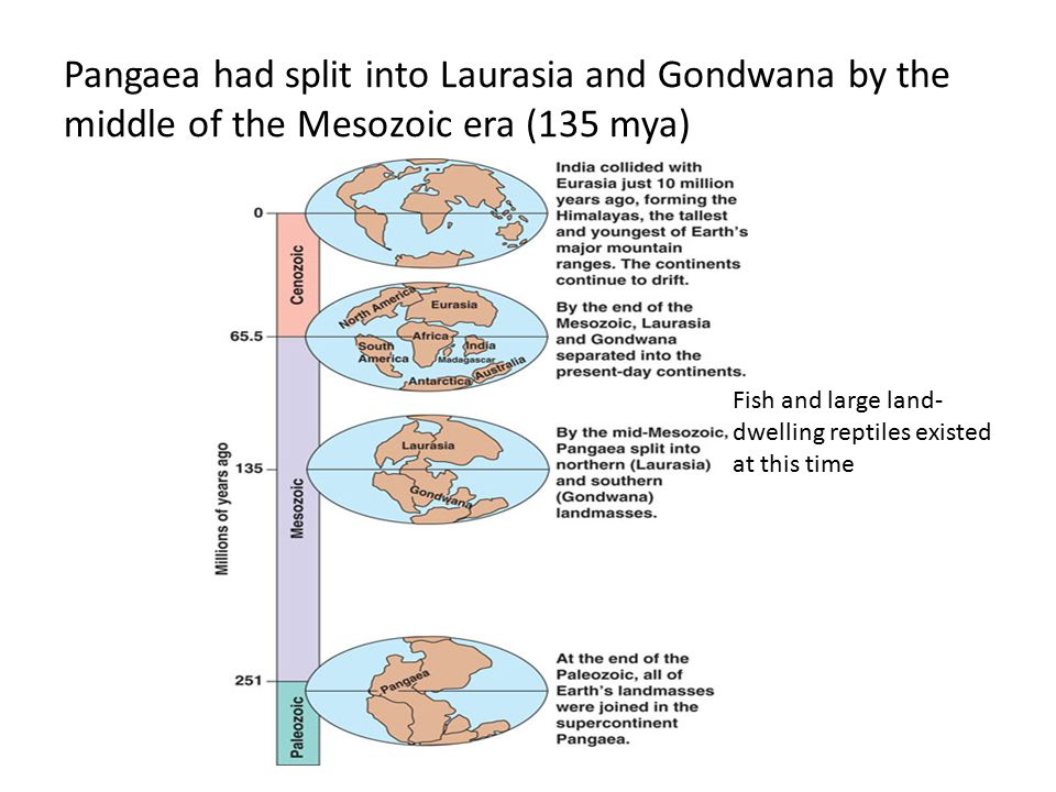 Pangaea had split into Laurasia and Gondwana by the middle of the Mesozoic era (135 mya)