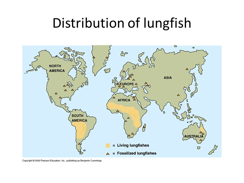 Distribution of lungfish