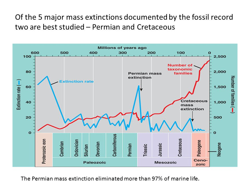 Of the 5 major mass extinctions documented by the fossil record two are best studied – Permian and Cretaceous
