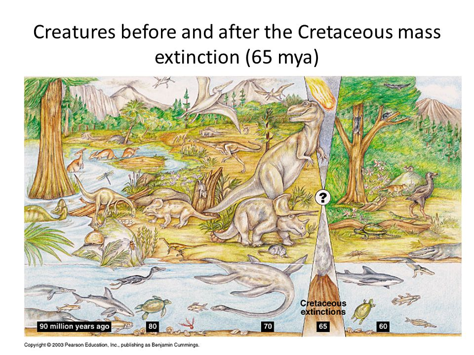 Creatures before and after the Cretaceous mass extinction (65 mya)