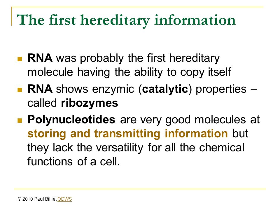 The first hereditary information