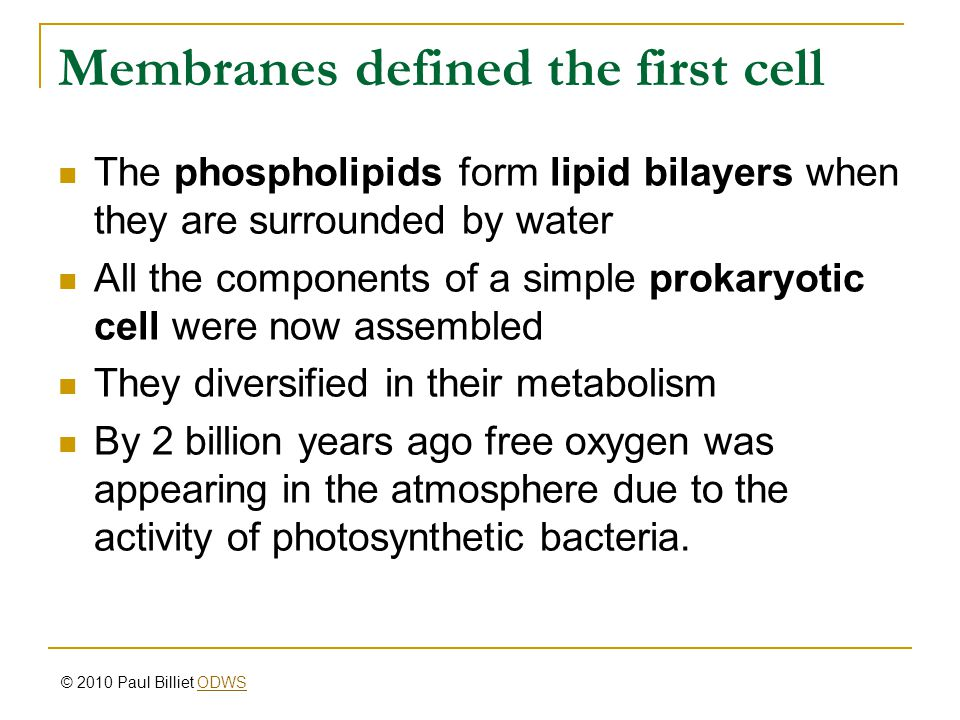 Membranes defined the first cell