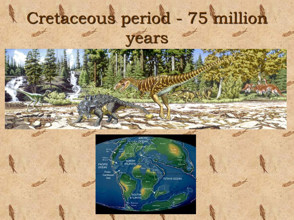 Cretaceous period - 75 million years