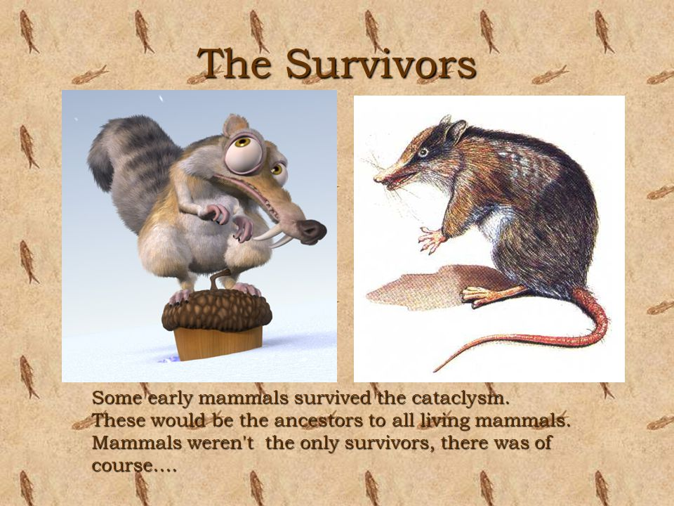 The Survivors Some early mammals survived the cataclysm.