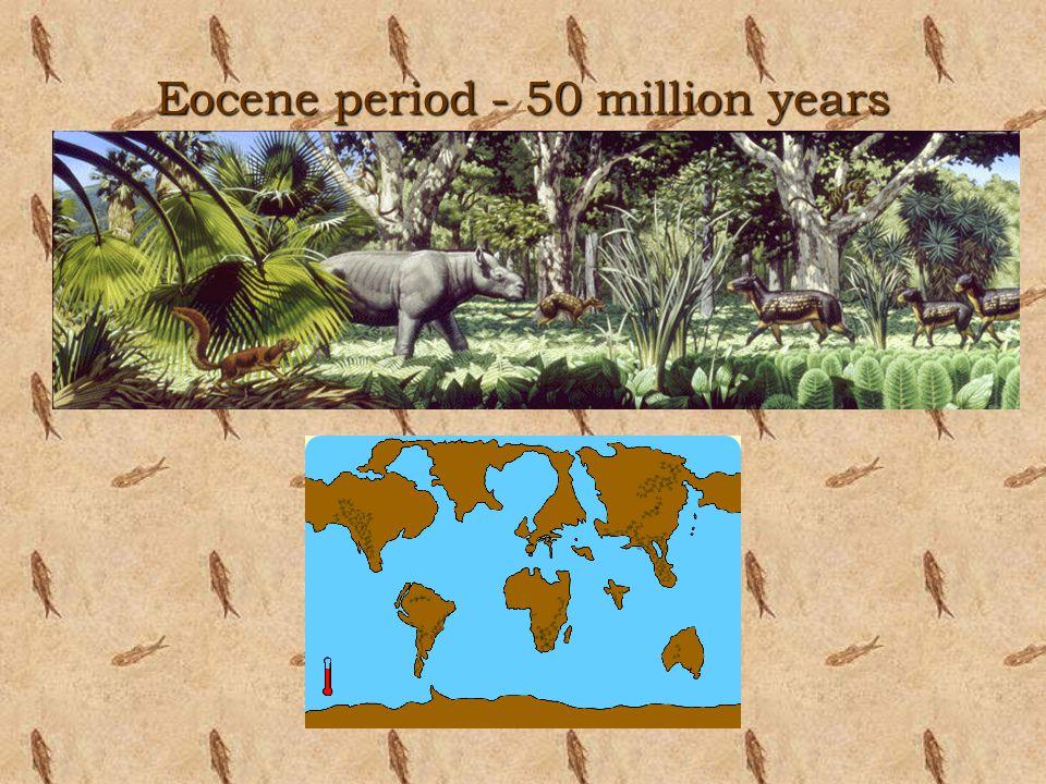 Eocene period - 50 million years