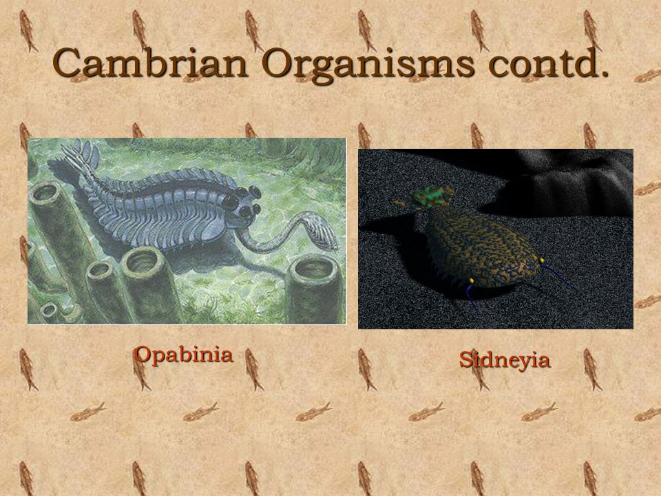 Cambrian Organisms contd.
