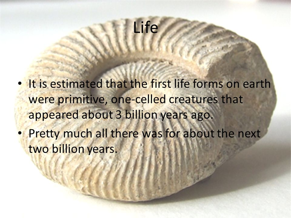 Life It is estimated that the first life forms on earth were primitive, one-celled creatures that appeared about 3 billion years ago.
