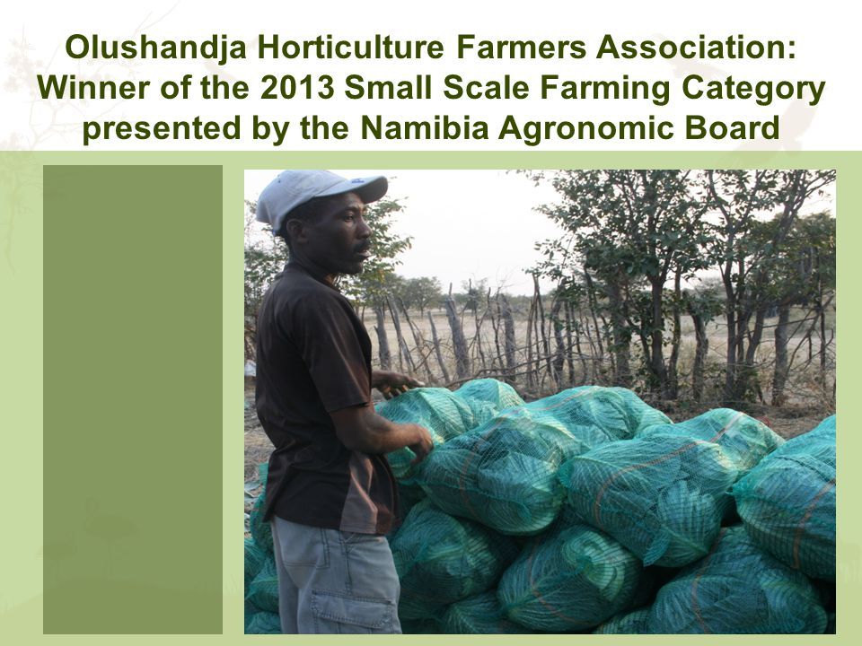 Olushandja Horticulture Farmers Association: Winner of the 2013 Small Scale Farming Category presented by the Namibia Agronomic Board