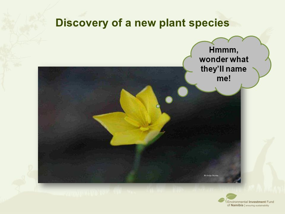 Discovery of a new plant species Hmmm, wonder what they'll name me!