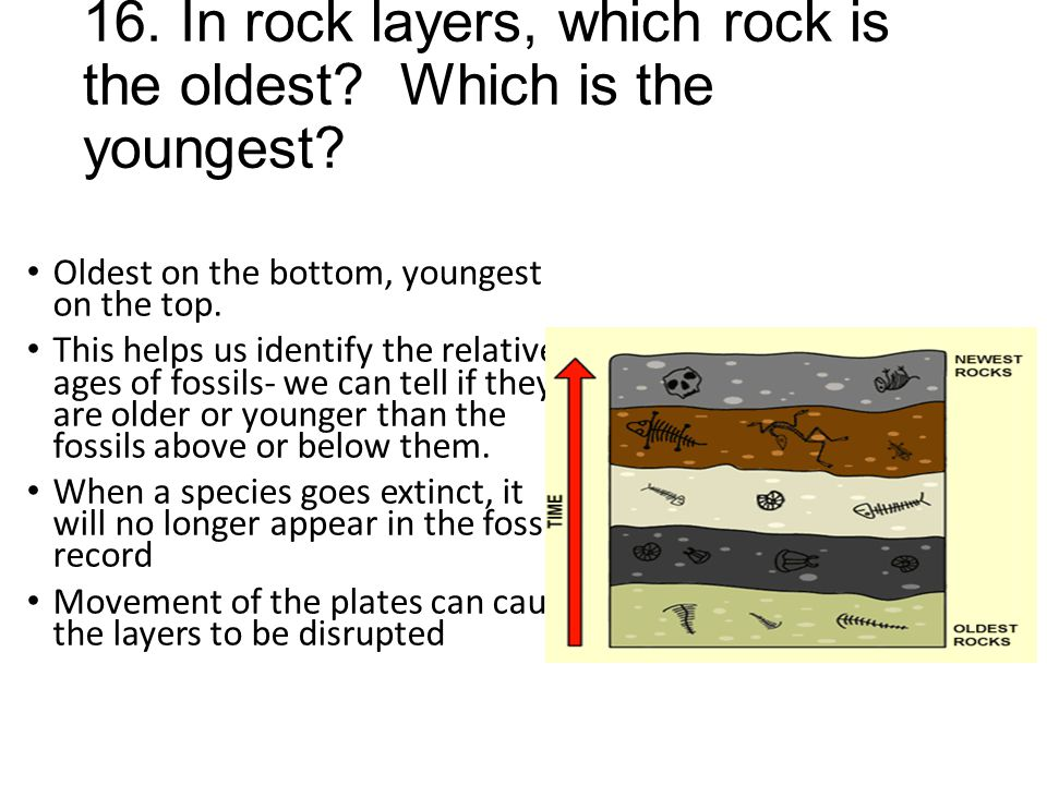 16. In rock layers, which rock is the oldest Which is the youngest