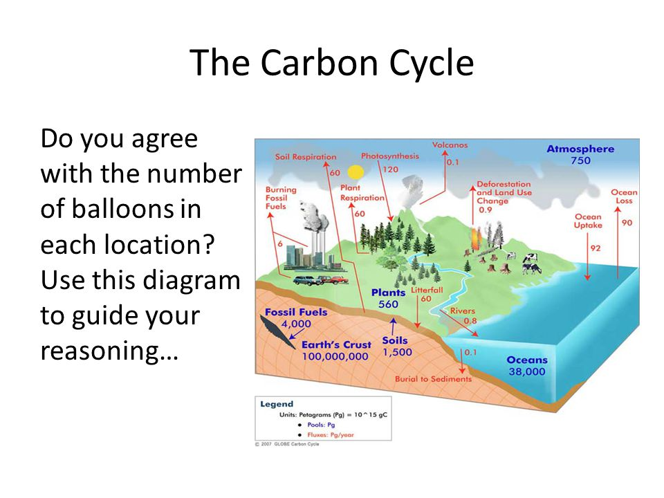 The Carbon Cycle Do you agree with the number of balloons in each location.