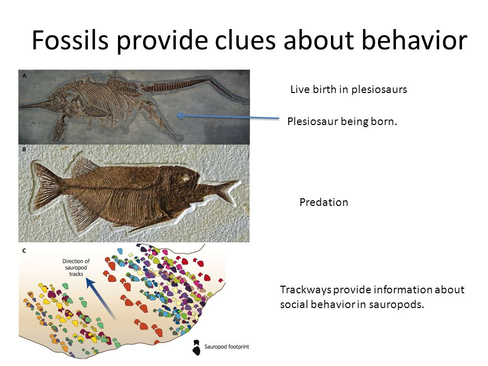 Fossils provide clues about behavior