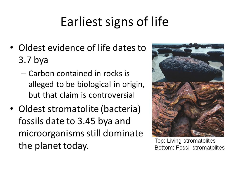 Earliest signs of life Oldest evidence of life dates to 3.7 bya