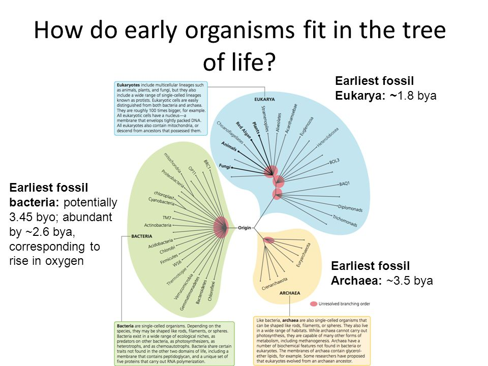 How do early organisms fit in the tree of life