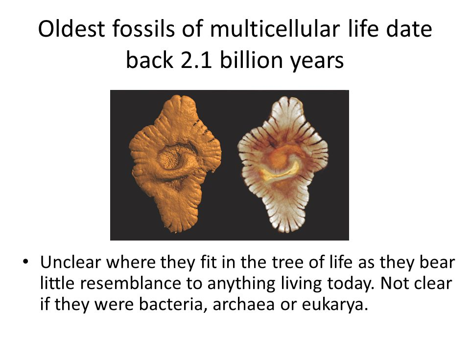 Oldest fossils of multicellular life date back 2.1 billion years