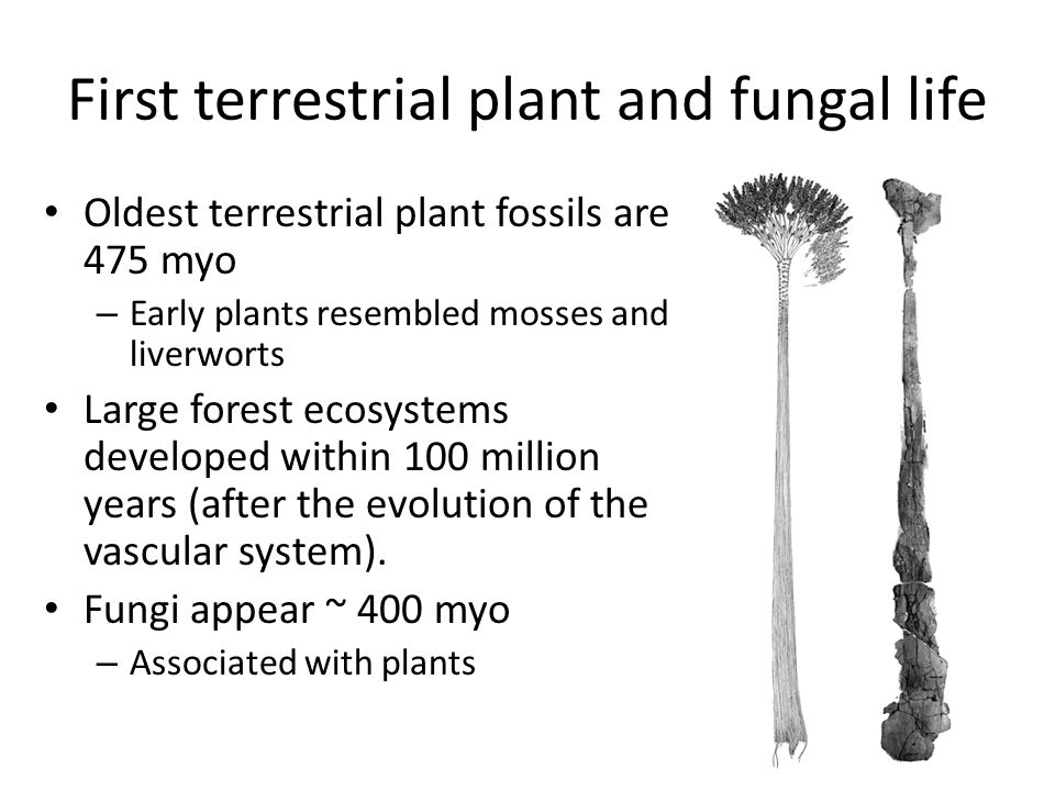 First terrestrial plant and fungal life