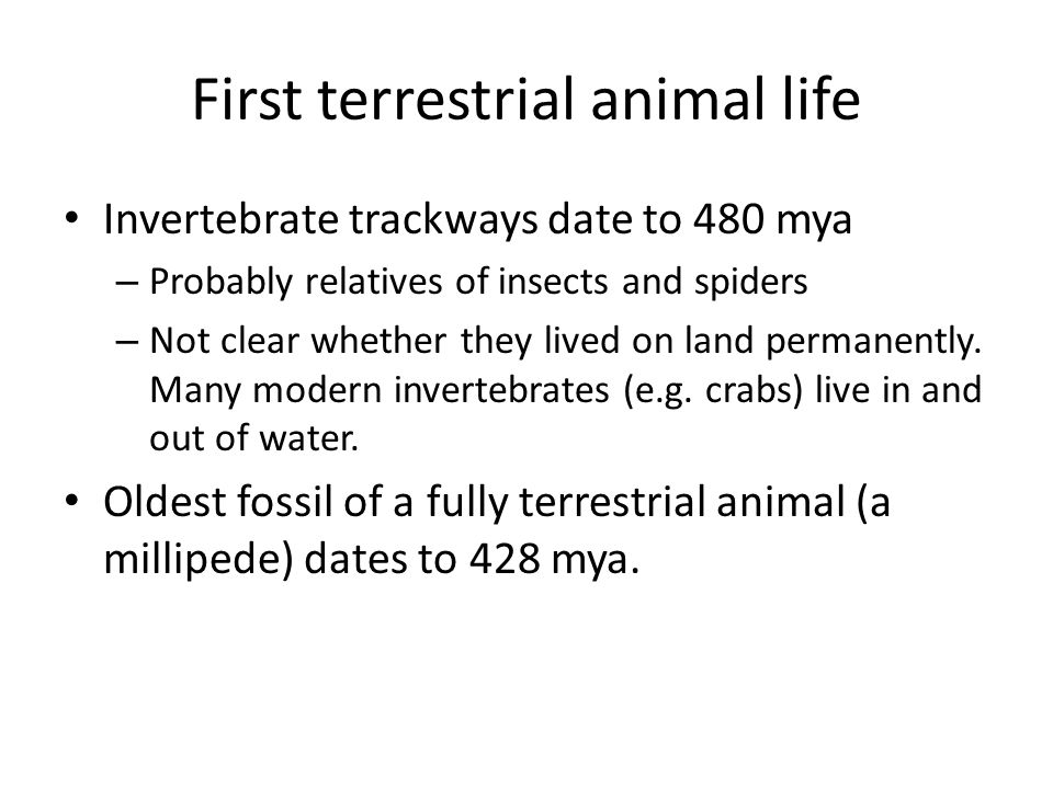 First terrestrial animal life