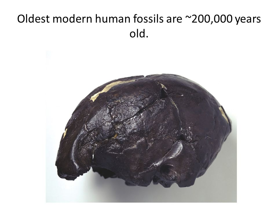 Oldest modern human fossils are ~200,000 years old.