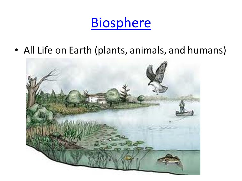 Biosphere All Life on Earth (plants, animals, and humans)