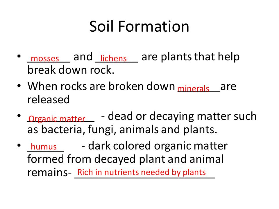 Soil Formation _______ and _______ are plants that help break down rock. When rocks are broken down _______are released.
