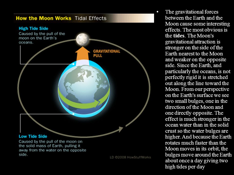 The gravitational forces between the Earth and the Moon cause some interesting effects.