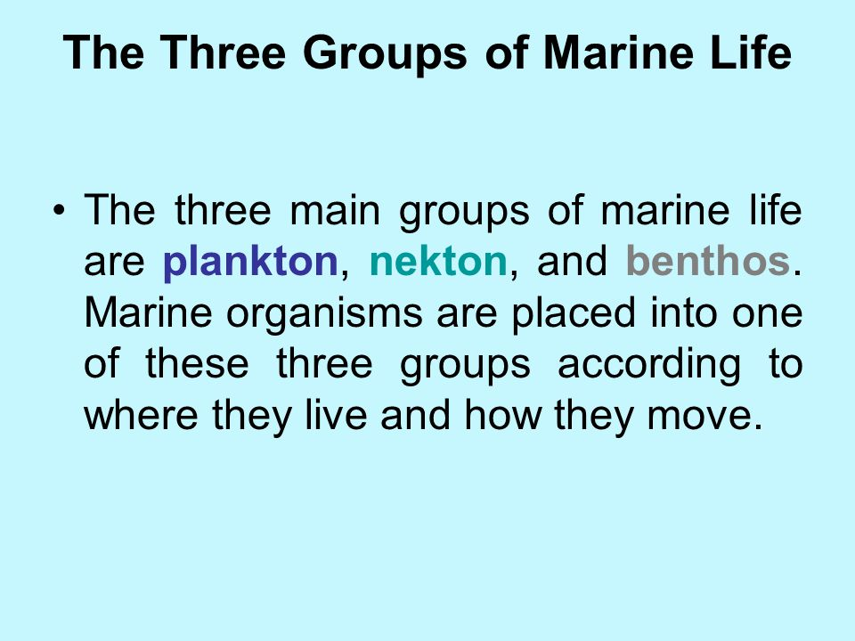 The Three Groups of Marine Life