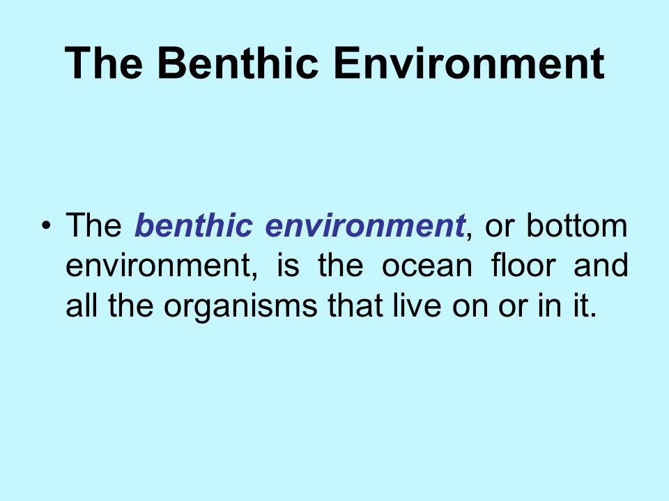 The Benthic Environment