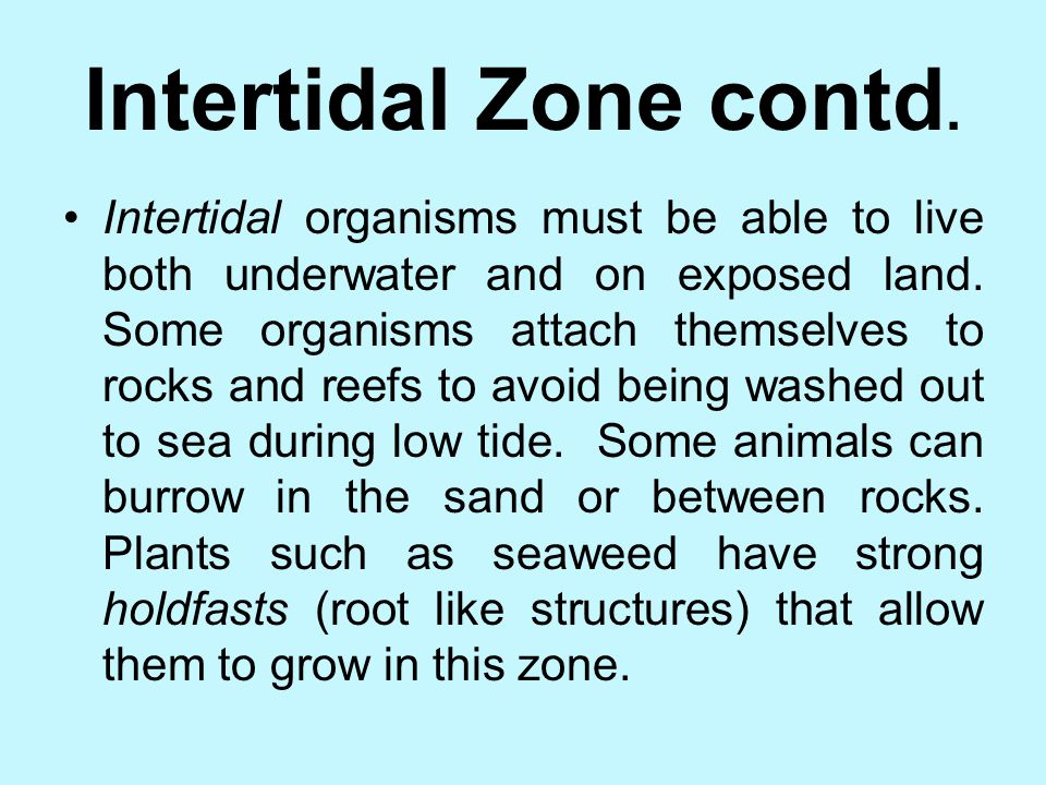 Intertidal Zone contd.