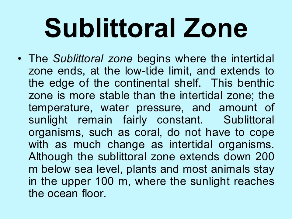 Sublittoral Zone