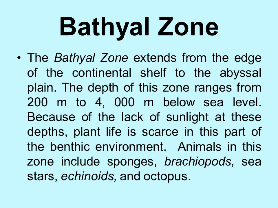 Bathyal Zone