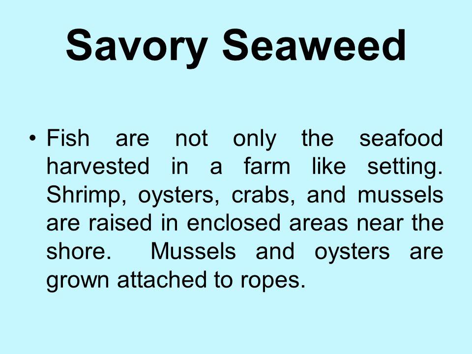 Savory Seaweed